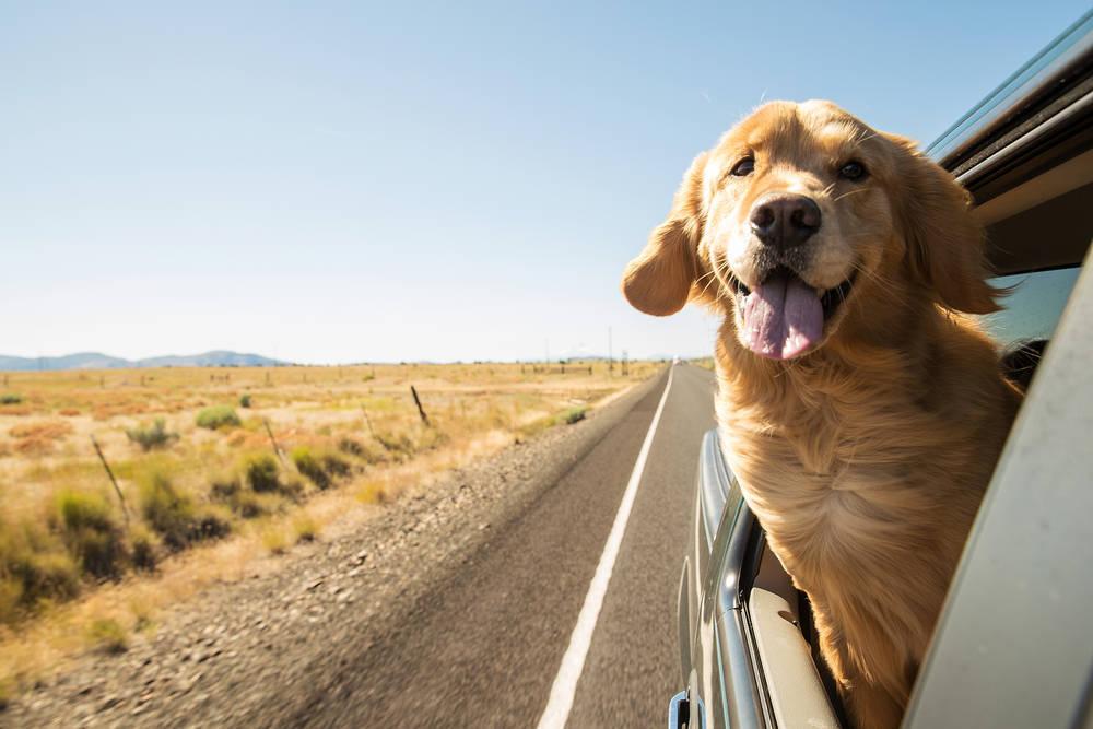 Consejos para ir a Barcelona con tu Perro